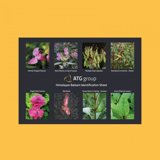 ATG Group Himalayan Balsam Identification Guide Preview