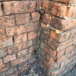 Japanese Knotweed coming out between the bricks in a wall