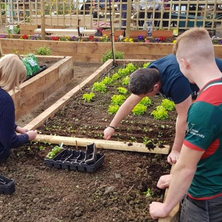 Planting of vegetables taking place in Ashes to Gold polytunnel